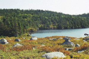 Visit Guysborough: Bull Hill